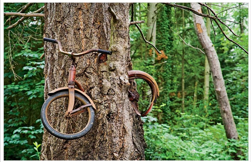 Puu-mis-kasvab-ümber-hüljatud-jalgratta