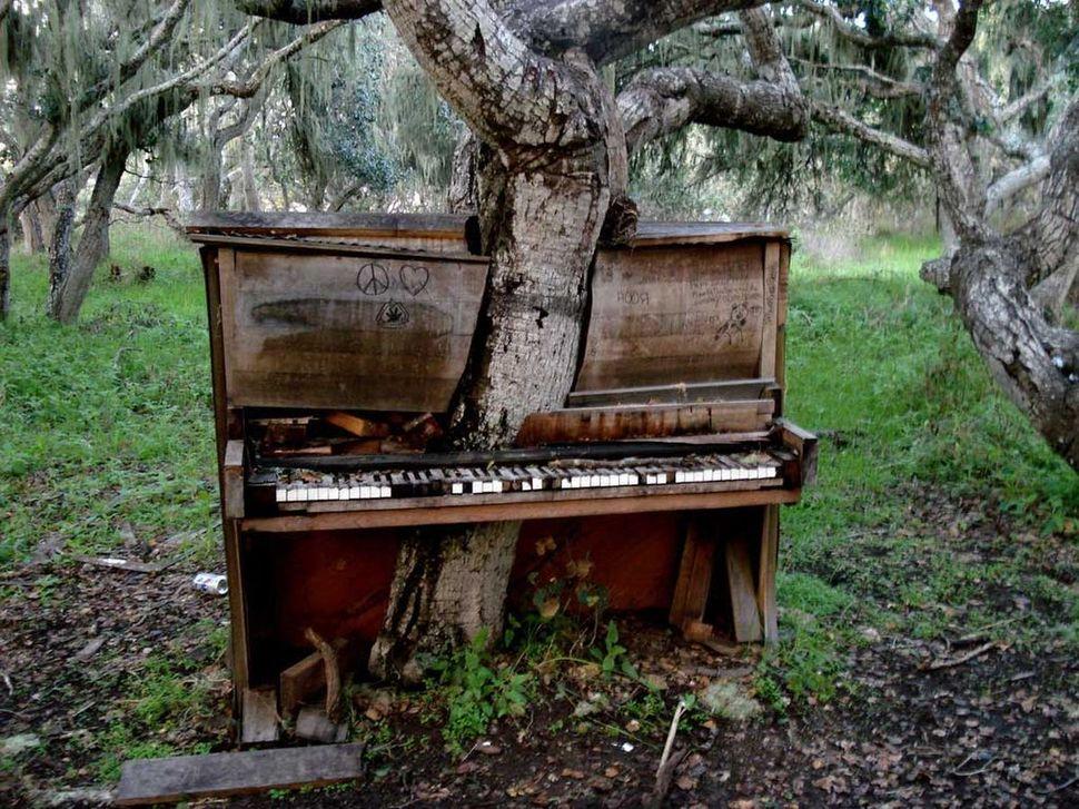 puu-klaver