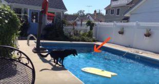 koer bassein