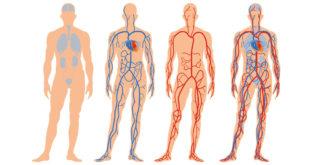Kuidas parandada vereringet?
